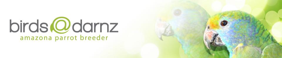 Web-Banner_2.jpg